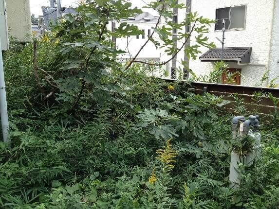 ビフォー横裏庭1