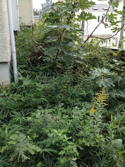 ビフォー縦裏庭