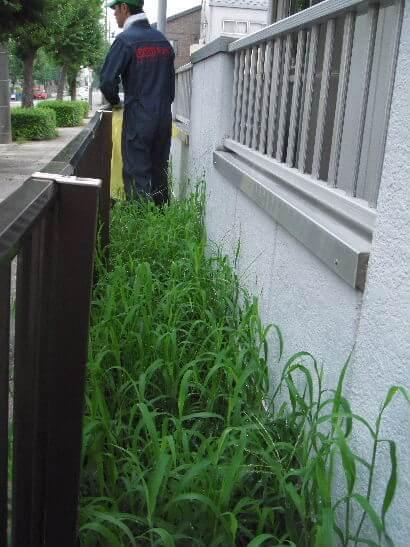 草刈り前入口