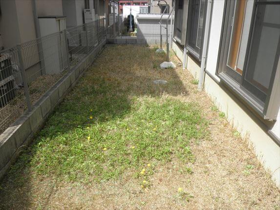 草引き前 中央横1
